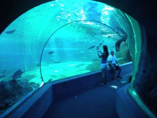 things to do in Maui with kids aquarium